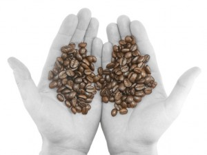 Coffee beans on black/white hands. Isolated